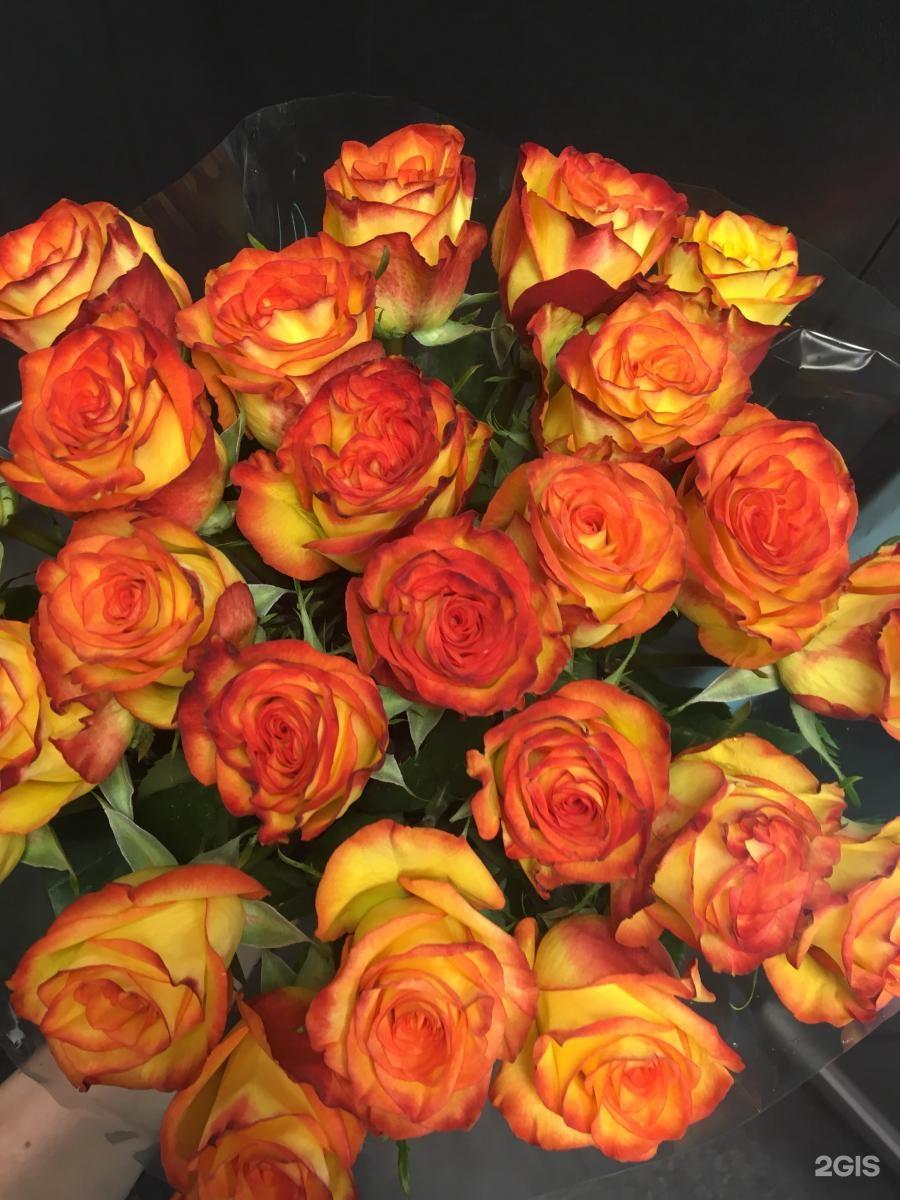 Цветы в новосибирске сфинкс, роз купить