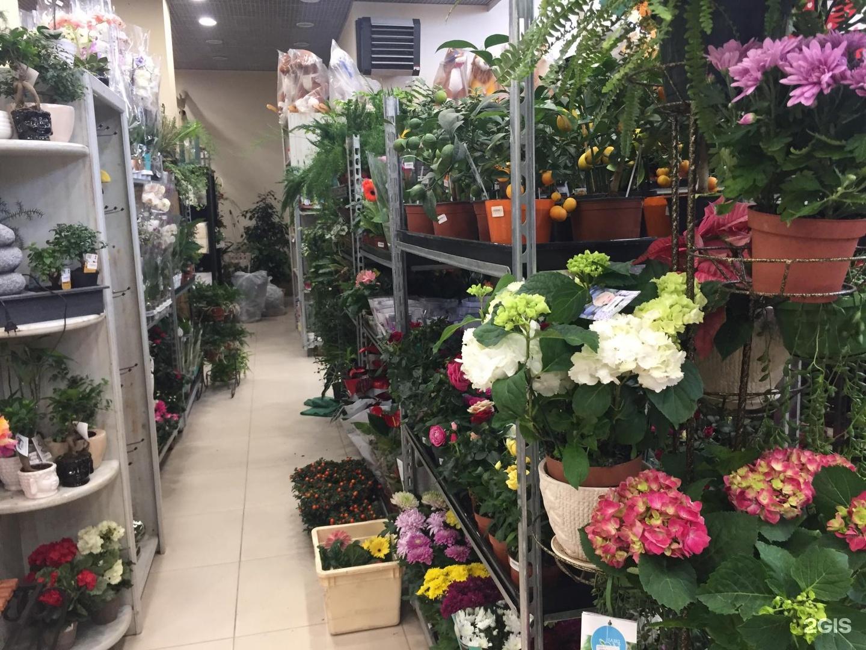 Цветы спб, цветы оптом новосибирск дешево магазин ирис