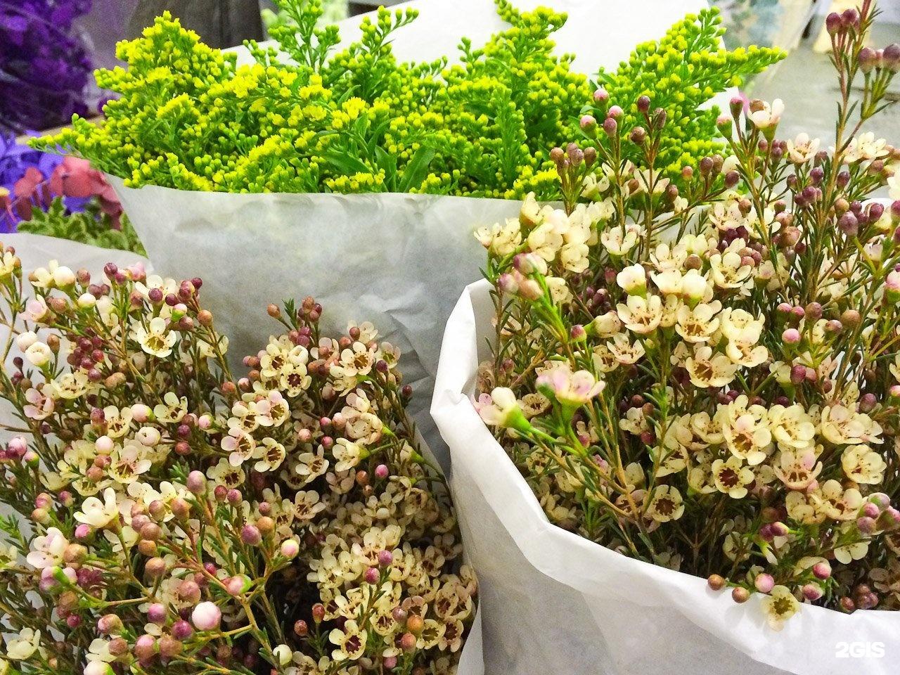 Невесты красно, оптовая база цветов ярославль богдановича