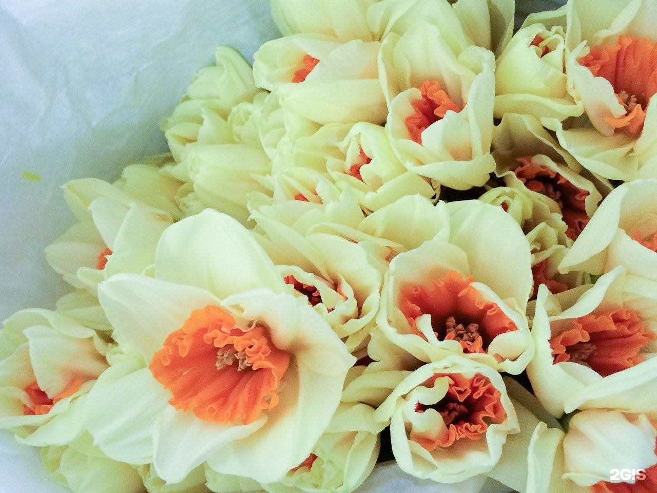 Оптовая база цветов ярославль богдановича