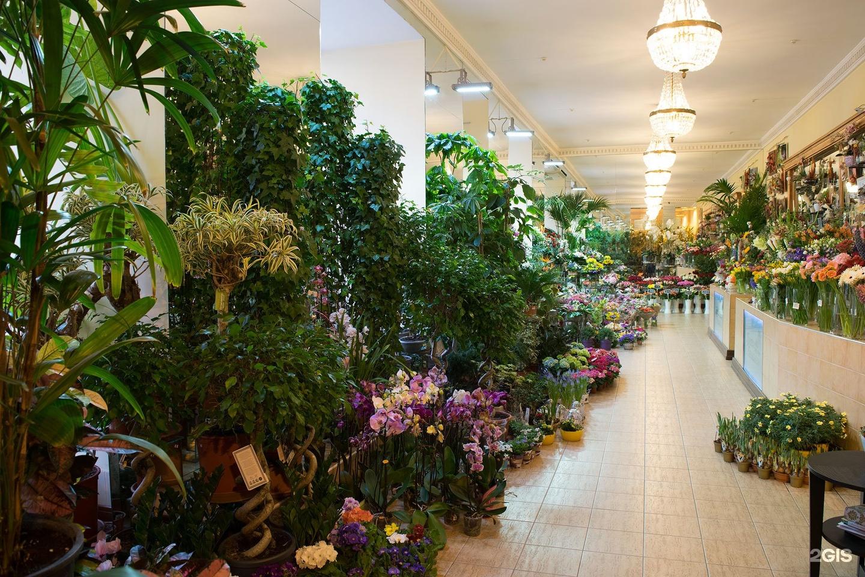 Магазин семь цветов в санкт-петербурге, цветок купить