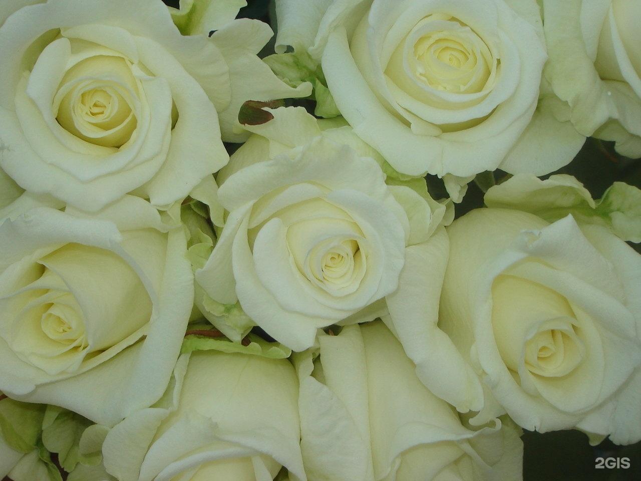 Красивые, аваланж цветы оптом брянск