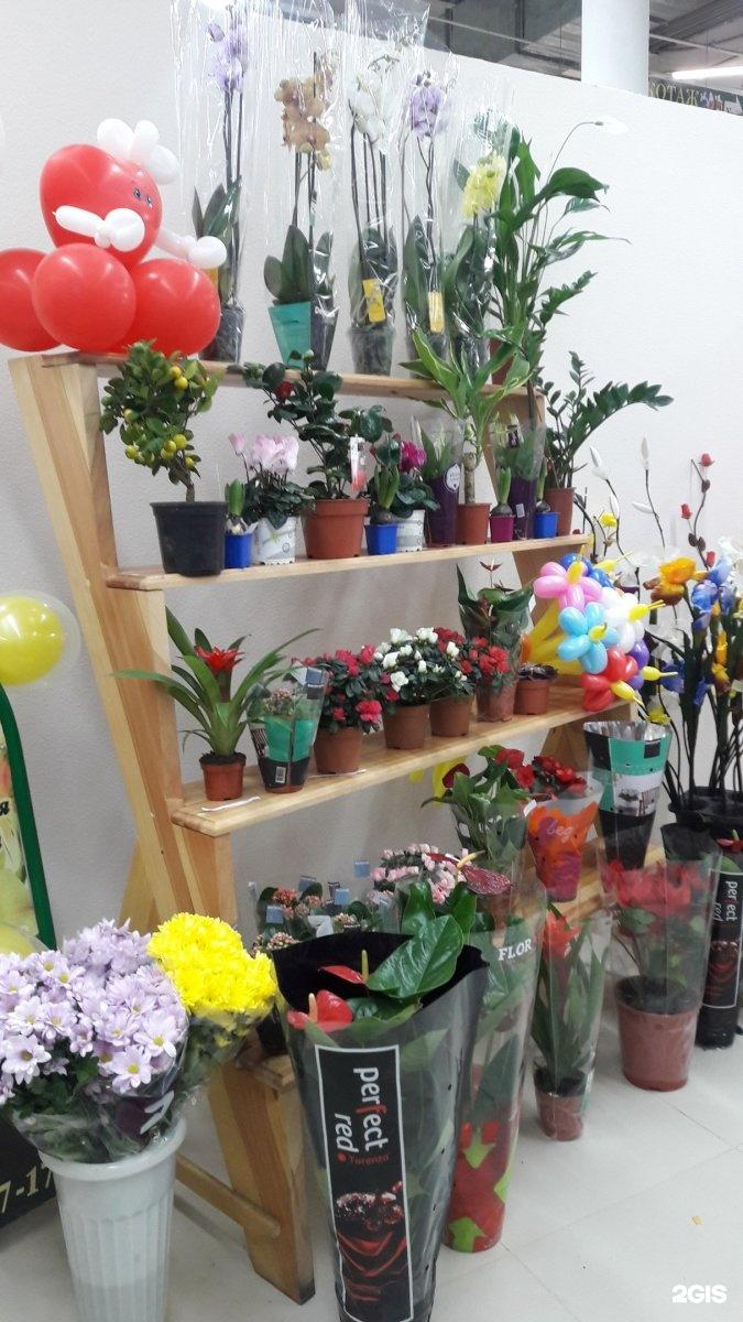 Строгино, фан фан тюльпан магазин цветы челябинск
